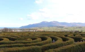 Maze Castlewellan Park County Down