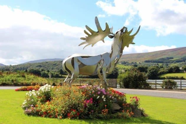 Irish Elk Warrenpoint